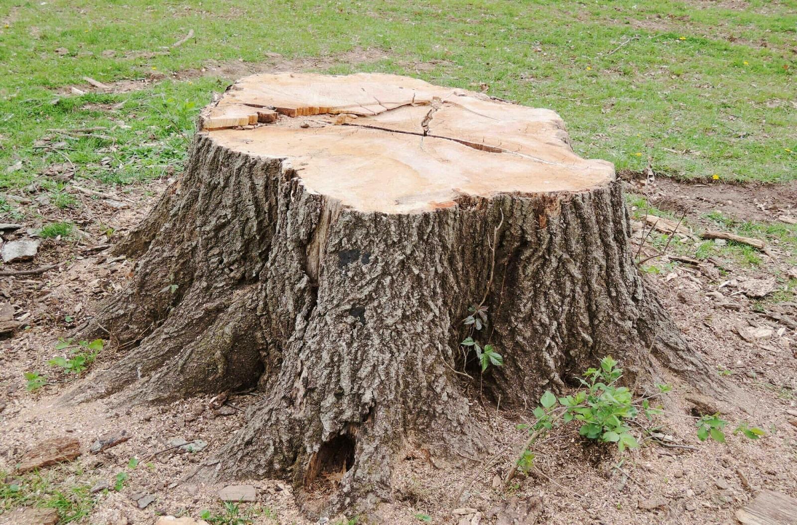 Service Stump Removal