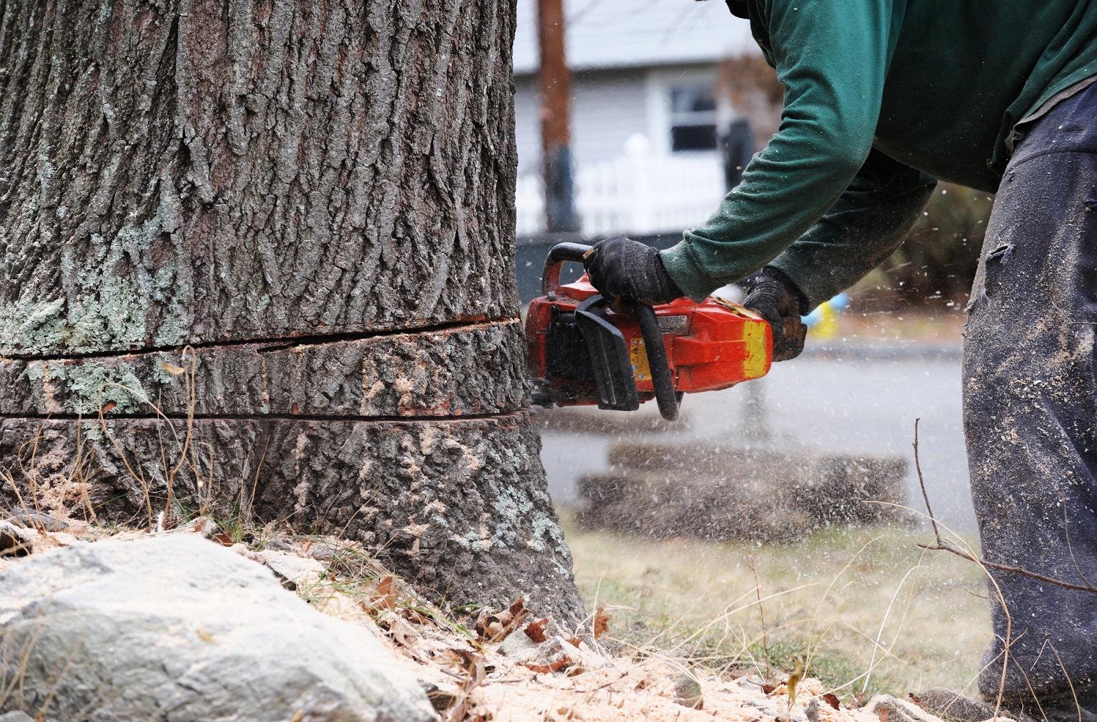 Service Tree Removal